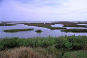 salt-marsh-ocean-in-background-with-white-barrier-between-and-green-plant_w725_h483